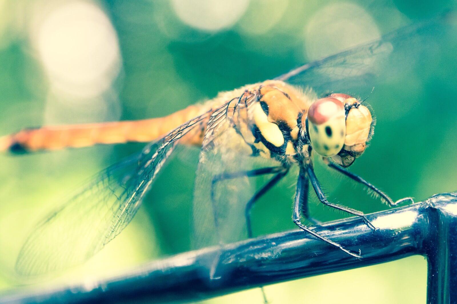 秋近し、トンボの話 といっても昆虫ではなく印刷用語の話