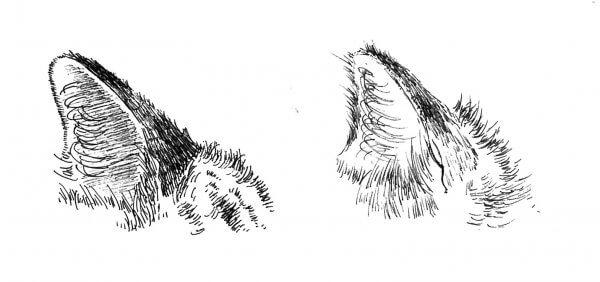 劇的に改善デザイナーが教えるペン画に適した道具選びポイント3つ