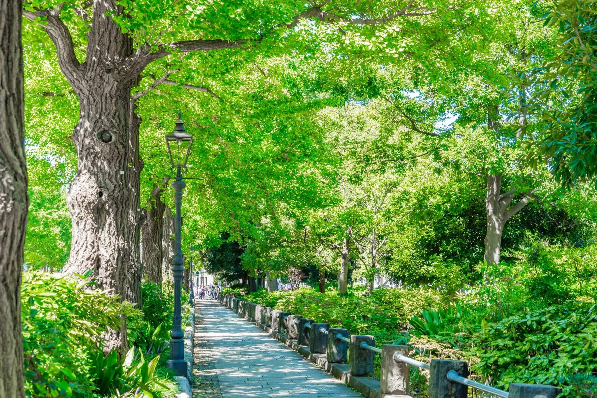 横浜開港のためにつくられた「横浜道」