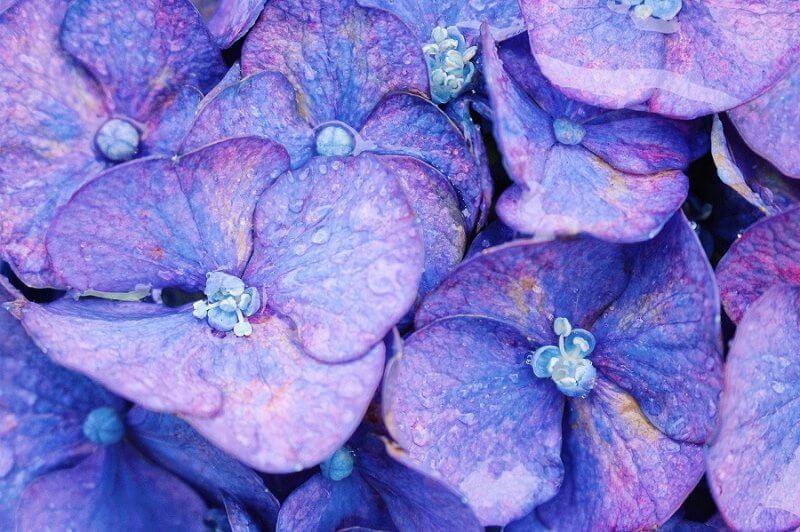 一眼レフでお花を撮るコツをご紹介!花を撮るのは最高に楽しい!